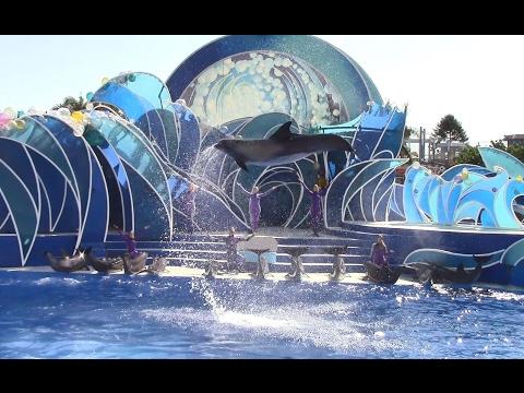 Dolphin Days (Full Show) at SeaWorld San Diego 10/26/16