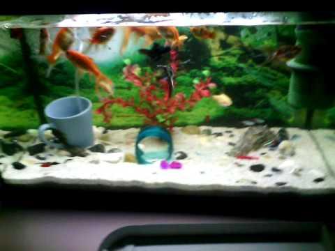 aquarium fische f ttern mit granulat youtube