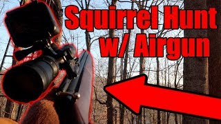 Airgun Squirrel Hunting!