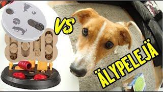 Pablo vastaan koirien älypelit!