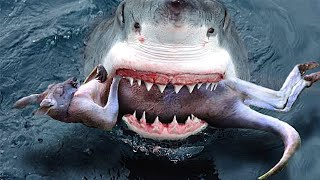 7 Cosas inusuales Tragadas por Tiburones