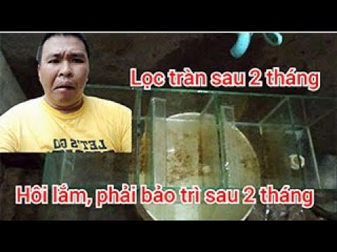 Cá la hán Ximachao P10 : Vệ sinh dàn lọc tràn trên bể cá la hán sau 2 tháng