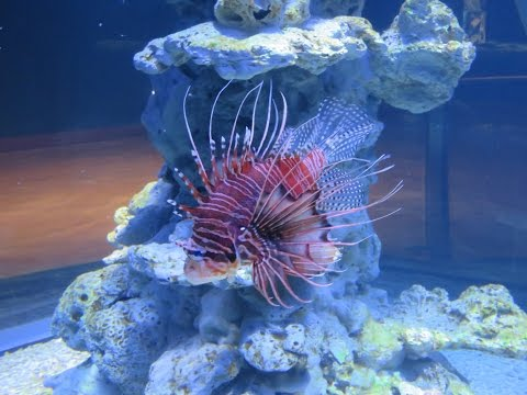 Inside Sharjah Aquarium , UAE