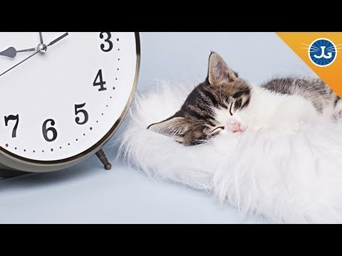 Why Your Cat Goes Crazy During Daylight Savings Time