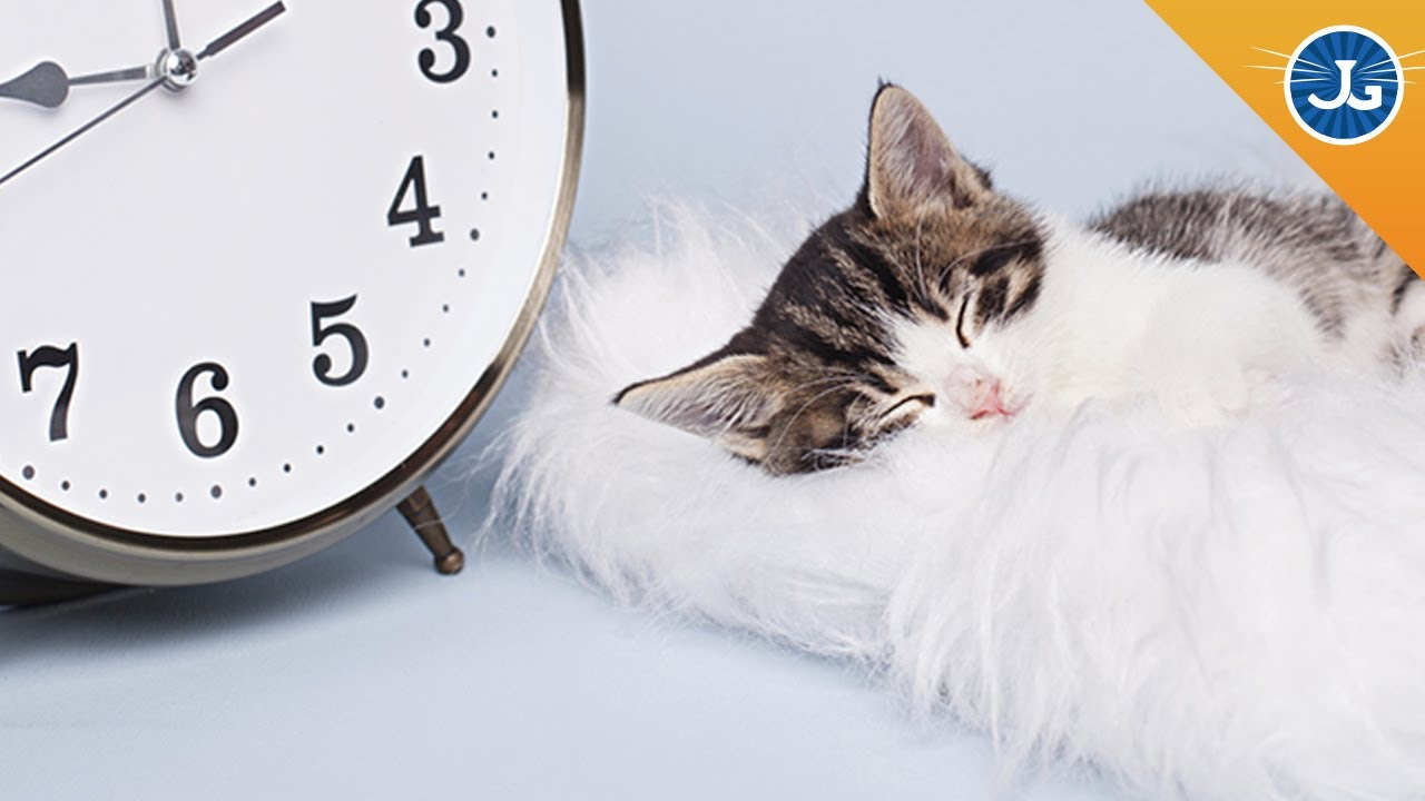 Why your cat goes crazy during daylight savings time youtube