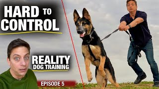 What it's REALLY Like. Going out for THE FIRST TIME with Moira: Reality Dog Training
