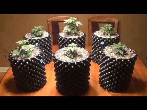 how to add maganese quickly to cannabis