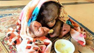 Учимся кушать ложкой Урок2. Орангутан Дана в Тайгане