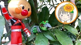 ❤ひまわりおねえさん❤アンパンレッド おもちゃ キュウレンオー キュウボイジャーを探せ お外 thumbnail