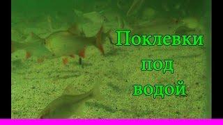 ПОПЛАВОК, поклевка под водой. На озере(3).underwater. Рыбалка, ловля