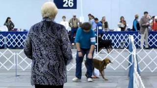 Holly, Akc Rally Novice, Portland Dog Obedience Club, Portland, Oregon, January 23, 2010