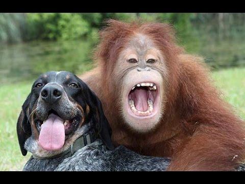Shio Monyet dan Anjing