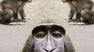 A funny story of a monkey