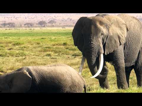 AMBOSELI - Land Of The Giants Tribute Film (KENYA)