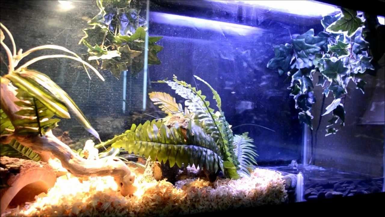 Amazing 55 gal ball python setup with pond youtube for Koi pond setup