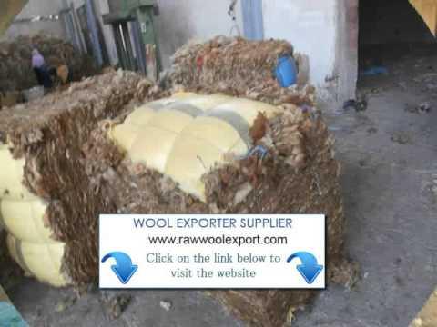 unwashed sheep's wool Exporter Ludhiana