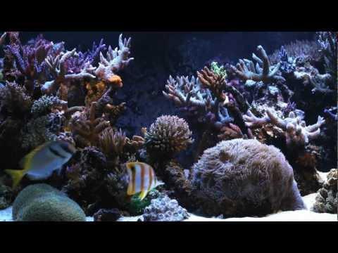 Заставка Тропические рыбки для рабочего стола, скачать