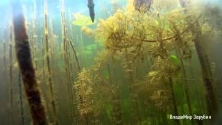 Подводная охота в Лен области. Прозрак 10 метров
