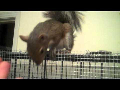 my pet grey squirrel Brennan