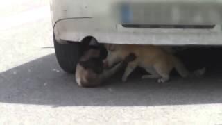 смешные животные видео Приколы с животными коты дерутся не на шутку  Интересное видео!