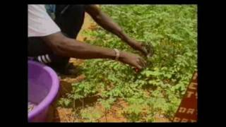 Discovery Channel - Moringa fights malnutrition