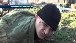 В Калининграде полицейские задержали двух подозреваемых в краже коров
