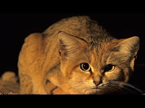 Вопрос: Чего нужно опасаться, оставляя кошку знакомым на время?