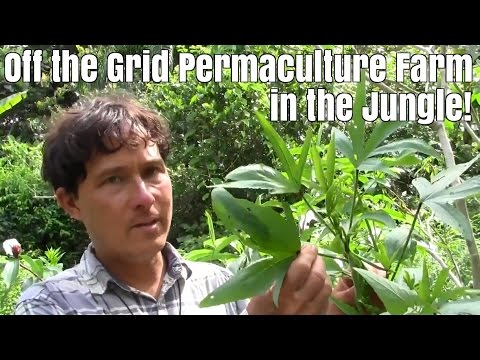 Off the Grid Permaculture Farm in the Jungle of Costa Rica