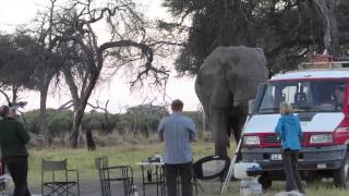 Dancing with Bull Elephant