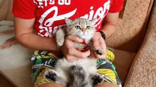 Как стричь когти котятам