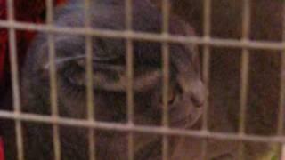 Выставка кошек в Харькове 25.04.2009 ч.4