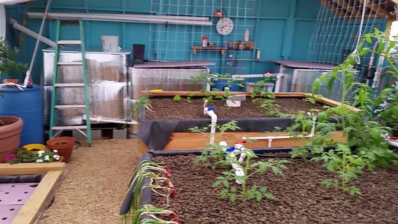 Backyard Aquaponics   Bug Control   Organic Farming   Aphids And White  Flies   YouTube