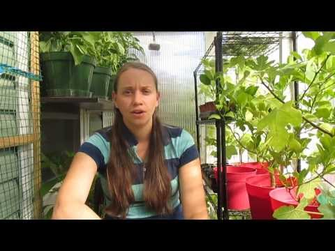 How To Heat Your House with a Greenhouse, This Is So Cool!!!