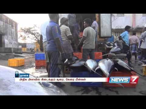 Nagapattinam fishermen keen on traditional Tuna fishing | News7 Tamil