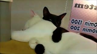 猫さんだけに寝姿が可愛い! 寝顔も可愛い! 横浜の関内駅から徒歩1分の...