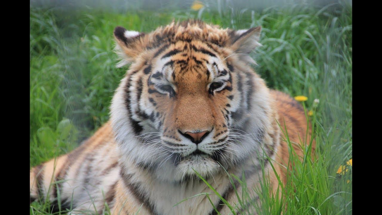 Tierpark Dassow