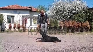 Училище за кучета -  Обучение на кучета -