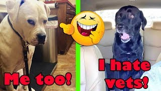 You Will Laugh Till You Faint: 30+ Hilarious Moments When Dogs Realized They Were Going To The Vet