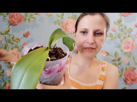 Как лечить болезни орхидей