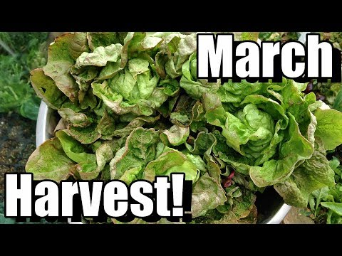 March Vegetable Garden Harvest (Zone 5): Local Food at Its Best!