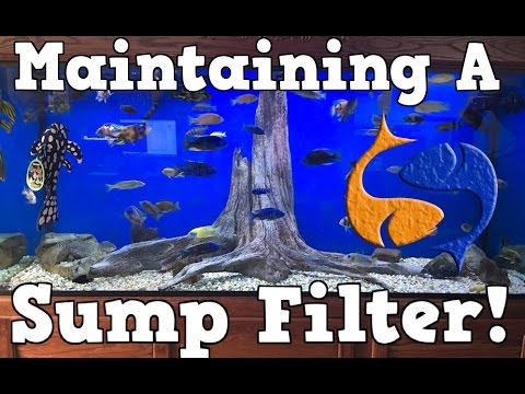What's A Sump Filter and How To Maintain One! KGTropicals!!!