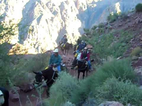 Horseback riding on the Grand Canyon