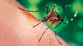 Mais au fait, c'est quoi la dengue ?