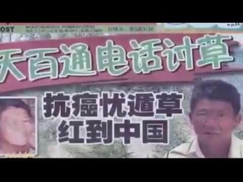 Clinacanthus Nutans, Sabah Snake Grass, 憂遁草, 优遁草, 沙巴蛇草, 青箭, Belalai gajah