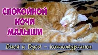 Спокойной ночи малыши. Кот забавно спит. Смешной кот Бася