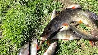 Рыбалка на реке Сосьва 6 сентября 2020