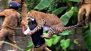 Животные атакуют людей.