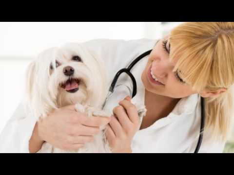 Vet Service | Gulfport Mississippi – The Pet Clinic