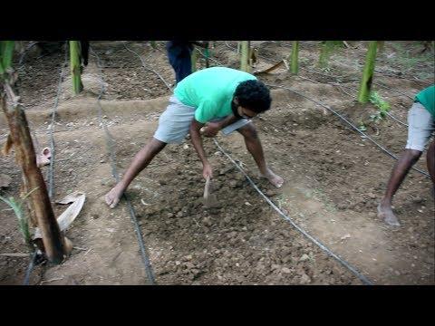 Rent a Farm and Learn Organic Farming | Indian Superheroes