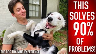 The 1 Thing I Do Every DAY (ALMOST) With My Dog